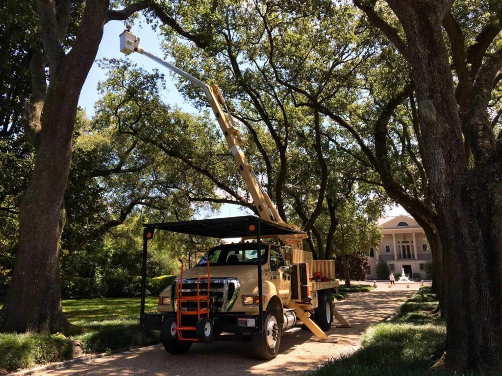 Commercial Tree Service-Delray Beach Tree Trimming and Tree Removal Services-We Offer Tree Trimming Services, Tree Removal, Tree Pruning, Tree Cutting, Residential and Commercial Tree Trimming Services, Storm Damage, Emergency Tree Removal, Land Clearing, Tree Companies, Tree Care Service, Stump Grinding, and we're the Best Tree Trimming Company Near You Guaranteed!