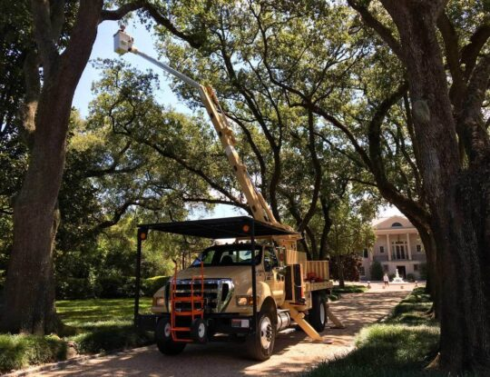 Commercial Tree Services-Delray Beach Tree Trimming and Tree Removal Services-We Offer Tree Trimming Services, Tree Removal, Tree Pruning, Tree Cutting, Residential and Commercial Tree Trimming Services, Storm Damage, Emergency Tree Removal, Land Clearing, Tree Companies, Tree Care Service, Stump Grinding, and we're the Best Tree Trimming Company Near You Guaranteed!