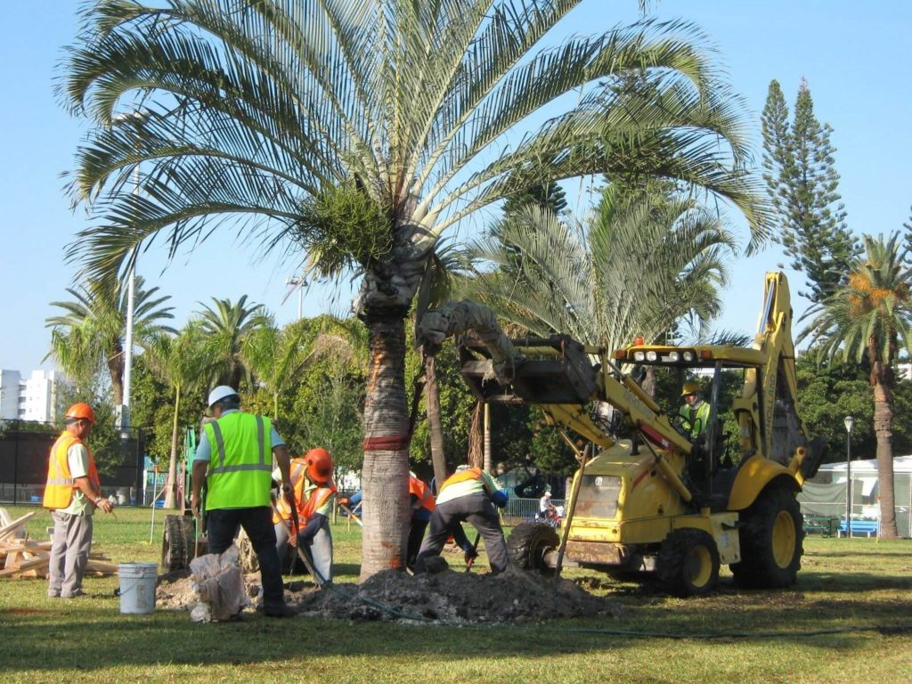 Palm Tree Removal-Delray Beach Tree Trimming and Tree Removal Services-We Offer Tree Trimming Services, Tree Removal, Tree Pruning, Tree Cutting, Residential and Commercial Tree Trimming Services, Storm Damage, Emergency Tree Removal, Land Clearing, Tree Companies, Tree Care Service, Stump Grinding, and we're the Best Tree Trimming Company Near You Guaranteed!