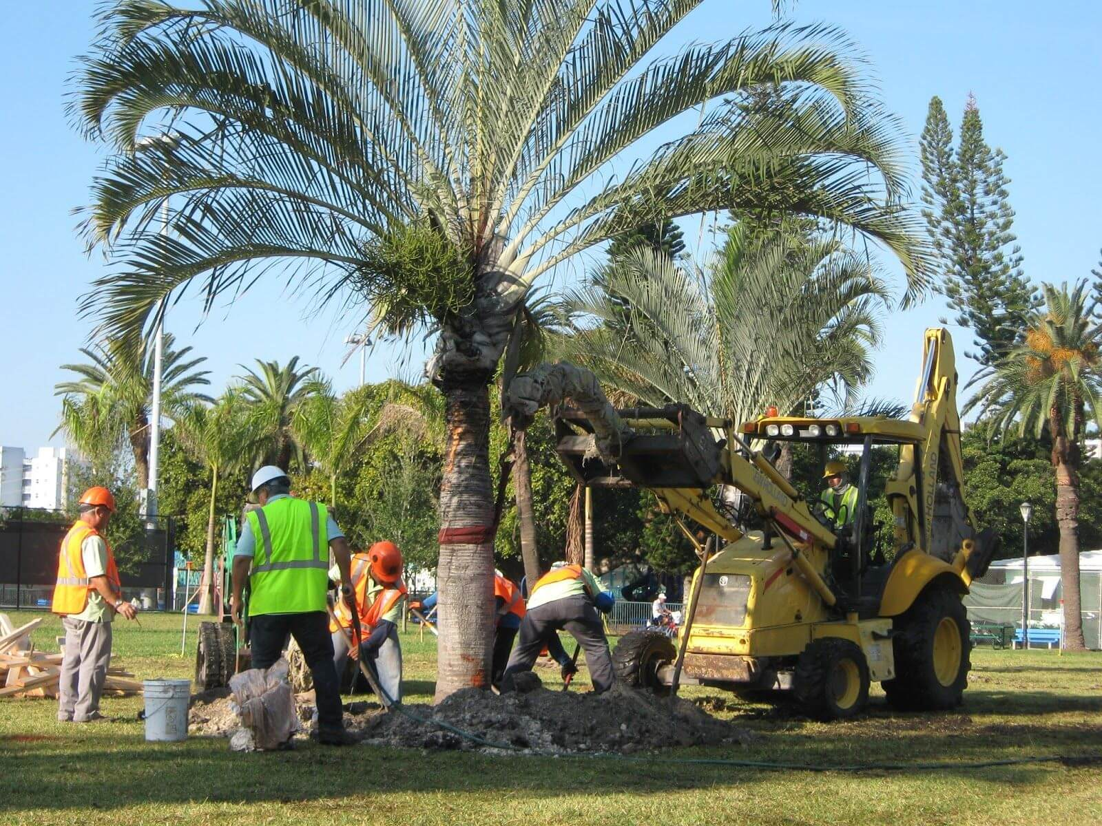 Palm Tree Trimming & Palm Tree Removal-Delray Beach Tree Trimming and Tree Removal Services-We Offer Tree Trimming Services, Tree Removal, Tree Pruning, Tree Cutting, Residential and Commercial Tree Trimming Services, Storm Damage, Emergency Tree Removal, Land Clearing, Tree Companies, Tree Care Service, Stump Grinding, and we're the Best Tree Trimming Company Near You Guaranteed!