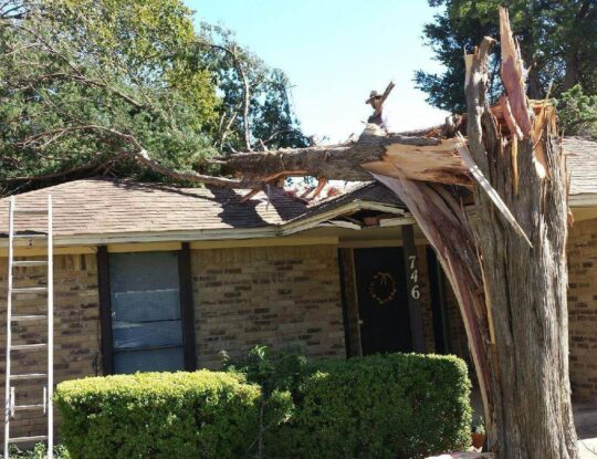 Residential Tree Services-Delray Beach Tree Trimming and Tree Removal Services-We Offer Tree Trimming Services, Tree Removal, Tree Pruning, Tree Cutting, Residential and Commercial Tree Trimming Services, Storm Damage, Emergency Tree Removal, Land Clearing, Tree Companies, Tree Care Service, Stump Grinding, and we're the Best Tree Trimming Company Near You Guaranteed!