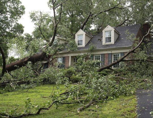 Storm Damage-Delray Beach Tree Trimming and Tree Removal Services-We Offer Tree Trimming Services, Tree Removal, Tree Pruning, Tree Cutting, Residential and Commercial Tree Trimming Services, Storm Damage, Emergency Tree Removal, Land Clearing, Tree Companies, Tree Care Service, Stump Grinding, and we're the Best Tree Trimming Company Near You Guaranteed!