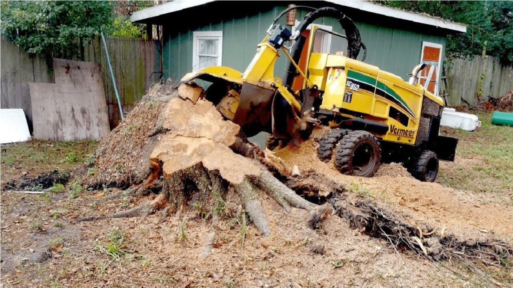 Stump Grinding-Delray Beach Tree Trimming and Tree Removal Services-We Offer Tree Trimming Services, Tree Removal, Tree Pruning, Tree Cutting, Residential and Commercial Tree Trimming Services, Storm Damage, Emergency Tree Removal, Land Clearing, Tree Companies, Tree Care Service, Stump Grinding, and we're the Best Tree Trimming Company Near You Guaranteed!