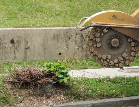 Stump Grinding & Removal-Delray Beach Tree Trimming and Tree Removal Services-We Offer Tree Trimming Services, Tree Removal, Tree Pruning, Tree Cutting, Residential and Commercial Tree Trimming Services, Storm Damage, Emergency Tree Removal, Land Clearing, Tree Companies, Tree Care Service, Stump Grinding, and we're the Best Tree Trimming Company Near You Guaranteed!