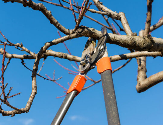 Tree Pruning-Delray Beach Tree Trimming and Tree Removal Services-We Offer Tree Trimming Services, Tree Removal, Tree Pruning, Tree Cutting, Residential and Commercial Tree Trimming Services, Storm Damage, Emergency Tree Removal, Land Clearing, Tree Companies, Tree Care Service, Stump Grinding, and we're the Best Tree Trimming Company Near You Guaranteed!