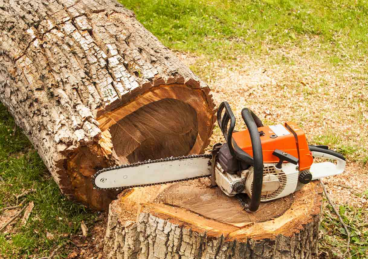 Tree Pruning & Tree Removal-Delray Beach Tree Trimming and Tree Removal Services-We Offer Tree Trimming Services, Tree Removal, Tree Pruning, Tree Cutting, Residential and Commercial Tree Trimming Services, Storm Damage, Emergency Tree Removal, Land Clearing, Tree Companies, Tree Care Service, Stump Grinding, and we're the Best Tree Trimming Company Near You Guaranteed!