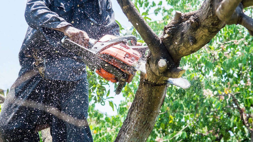 Tree Trimming-Delray Beach Tree Trimming and Tree Removal Services-We Offer Tree Trimming Services, Tree Removal, Tree Pruning, Tree Cutting, Residential and Commercial Tree Trimming Services, Storm Damage, Emergency Tree Removal, Land Clearing, Tree Companies, Tree Care Service, Stump Grinding, and we're the Best Tree Trimming Company Near You Guaranteed!