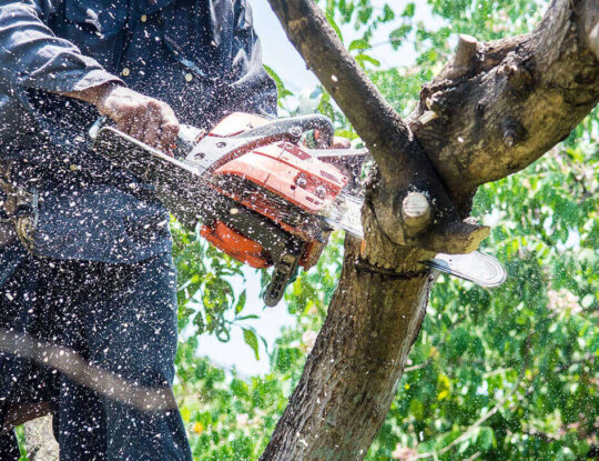 Tree Trimming Services-Delray Beach Tree Trimming and Tree Removal Services-We Offer Tree Trimming Services, Tree Removal, Tree Pruning, Tree Cutting, Residential and Commercial Tree Trimming Services, Storm Damage, Emergency Tree Removal, Land Clearing, Tree Companies, Tree Care Service, Stump Grinding, and we're the Best Tree Trimming Company Near You Guaranteed!